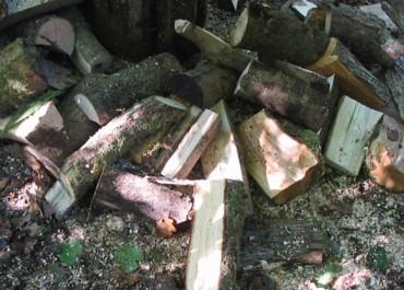 Logs_1