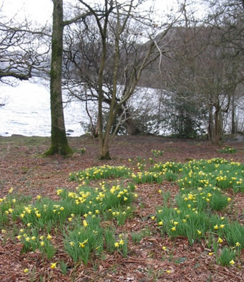 daffodils poem by william wordsworth. William Wordsworth and his