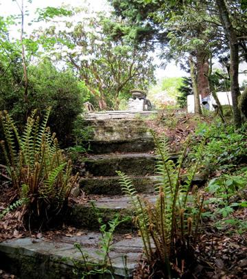 Steps_1